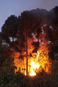 forest fire  - fire bans