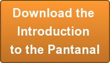 Pantanal-Introduction